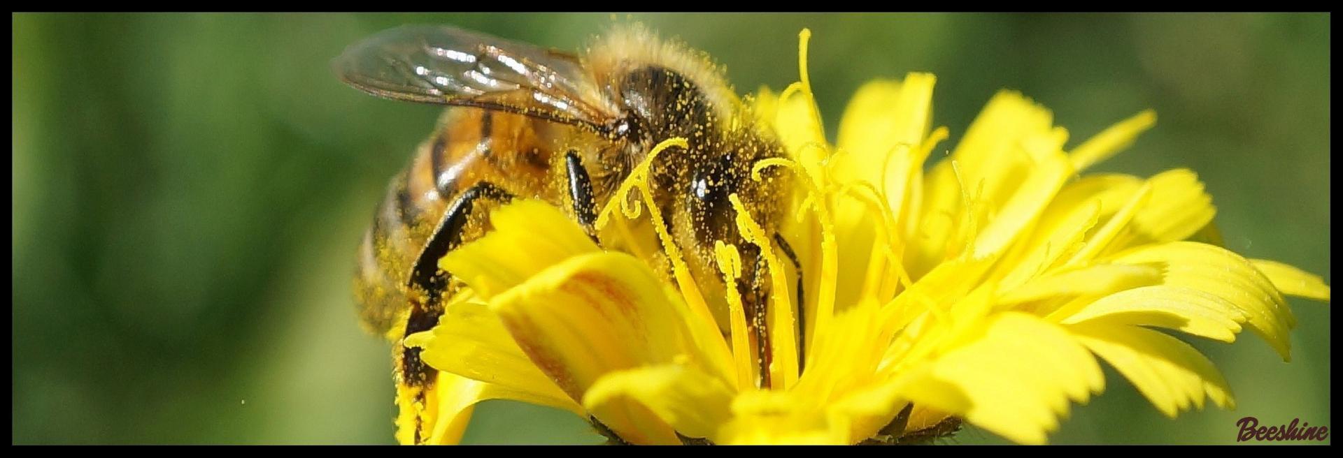 Beeshine-Aliment complémentaire pour abeilles