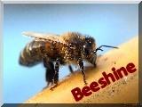 Aliment complémentaire pour abeilles